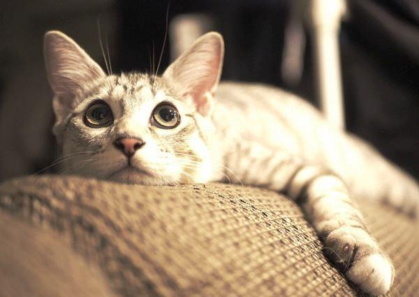 夜中の猫の大運動会がうるさい!やめさせる方法5つ