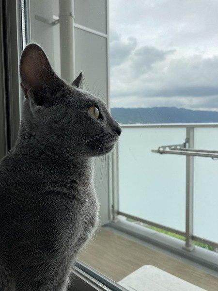 猫が部屋のドアを開けてしまうときの対策5つ
