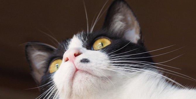 猫が飼い主を『バカにしているとき』の仕草5選