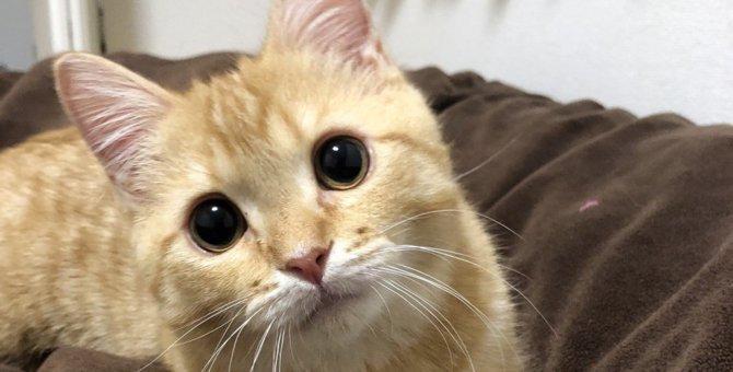 猫が飼い主だけにする『愛情表現』の行動4つ