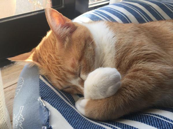 愛猫に元気でいてほしい・・・「テリントンTタッチ」で細胞を活発化!