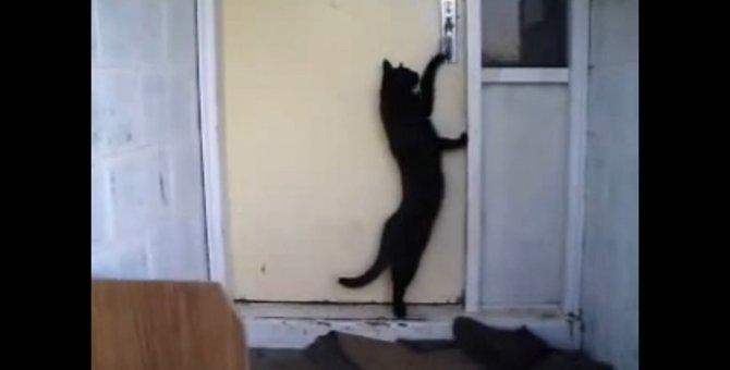 「今帰ったにゃ」とノックしたのに待てども待てどもドアが開かないのは…