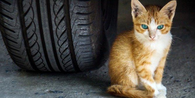 自由に外に出れる猫は幸せだと思いますか?