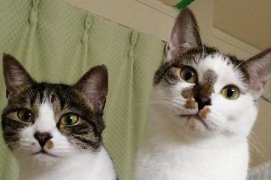 猫に『気持ち』をわかってもらう方法3つ!大好きとダメを伝えるコツは?