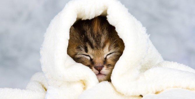 猫の「キャベツ巻き」がかわいい!その魅力とは