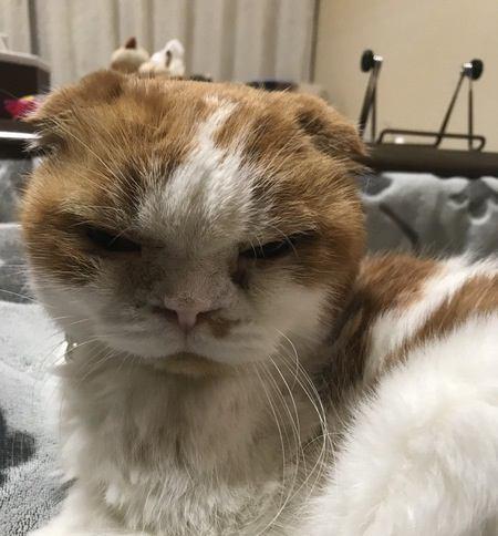 猫が怒っているのときの仕草3つ