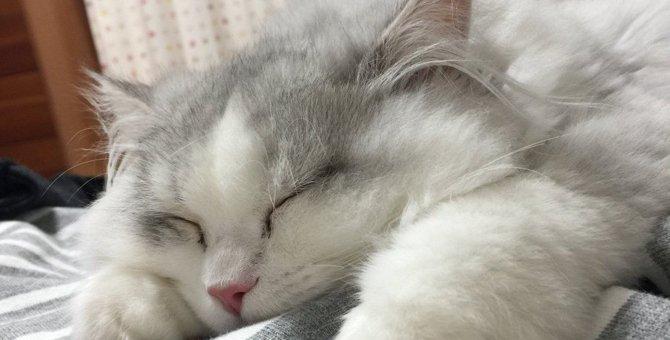 猫が『洗濯物の山』に興味を示す4つのワケ