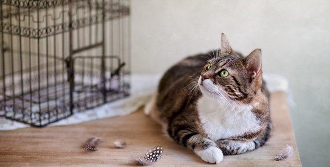 猫のケージ飼いメリット・デメリットと注意点!