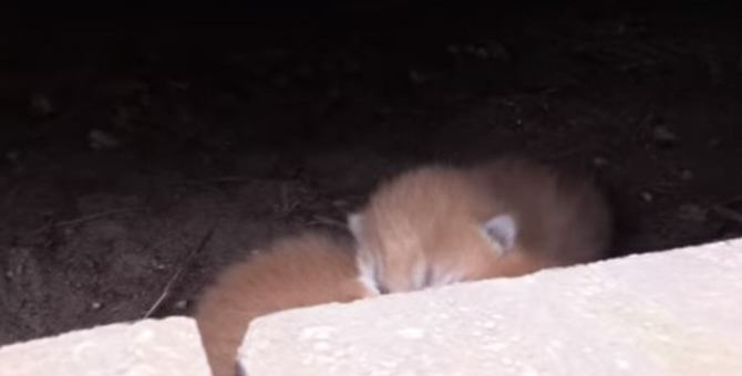 床下から子猫の鳴き声…小さな命を救え!