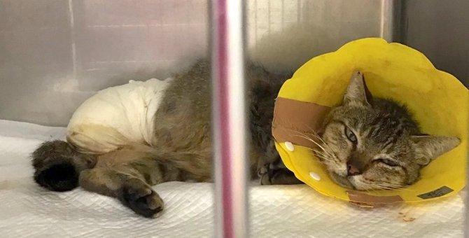 【緊急レスキュー】罠によるケガか…足を失っても頑張る猫「嵐くん」