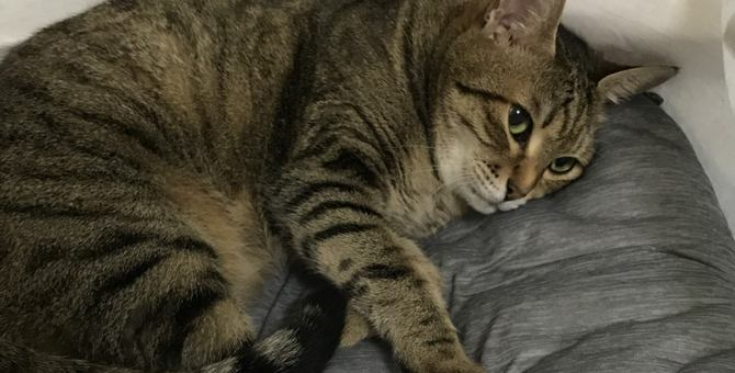 シニア猫の体に優しい生活環境4つ