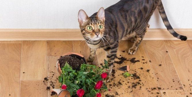 猫のイタズラを防止する3つの方法