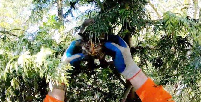 「早く助けて!」木の上で途方に暮れる猫を決死の救出!