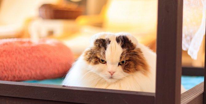 猫が『ふてくされる』ときによくある原因5つ