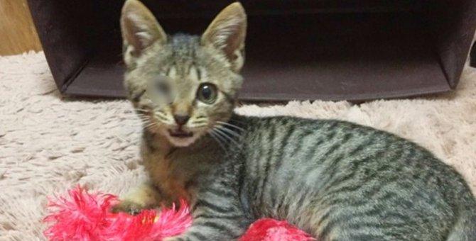 片目が壊死した小さな子猫…懸命な看病で幸せな家族の一員に!