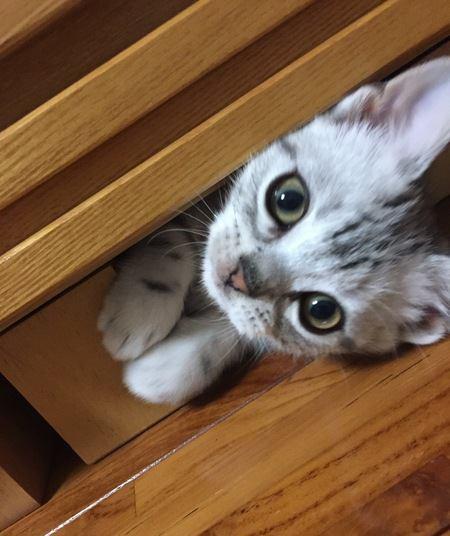 猫が迷子になりやすい場所4つ