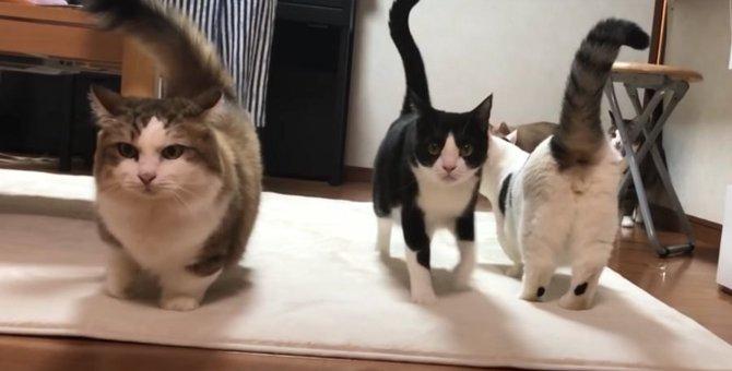 どんな小さな『おやつ』の声も聞き逃さない猫一家