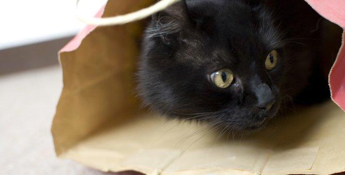 黒猫の性格は甘えん坊で好奇心旺盛