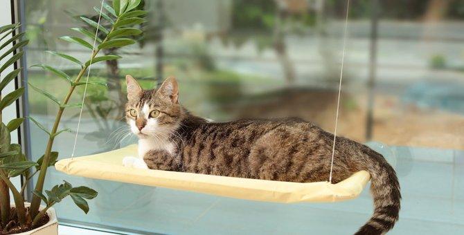 猫窓ベッドやハンモックのおすすめ人気ランキング10選!