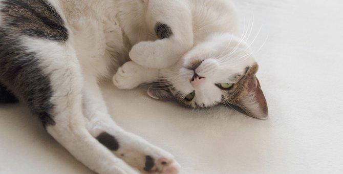猫の飼い主さん必見!『またたび』の正しい知識完全ガイド