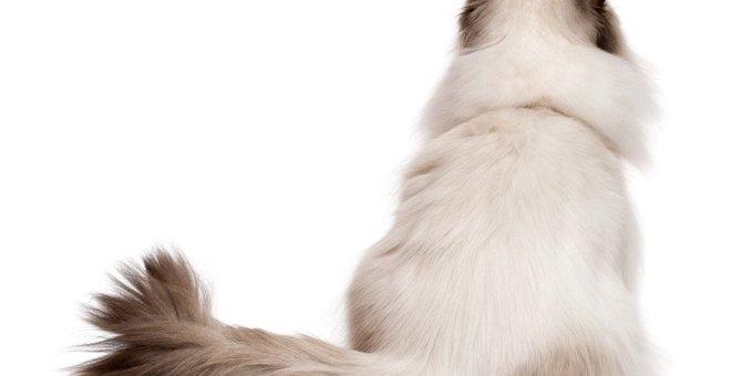 猫が『激しくしっぽを振る』理由3つ!大きくバタバタ動かしている時の注意点は?
