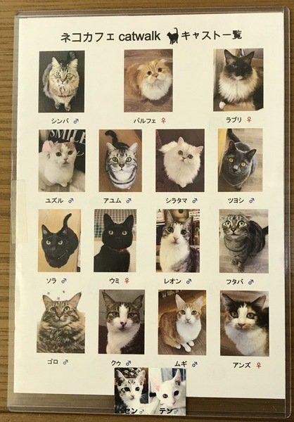 猫たちの幸せを考え閉店を決意!catwalk(キャットウォーク)大宮が残してくれたもの