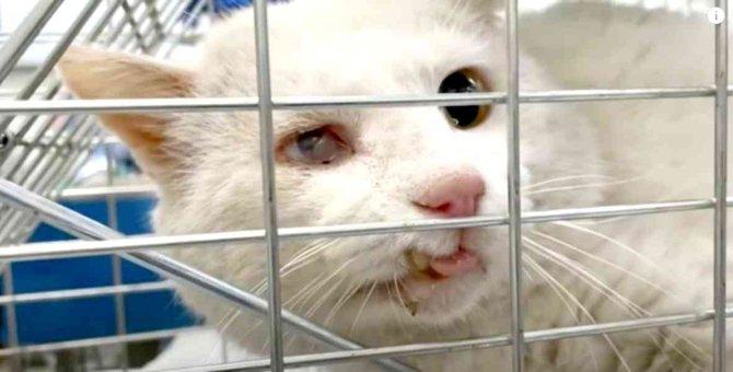 首に怪我を負った老猫…過酷な野良猫生活の現実とは?