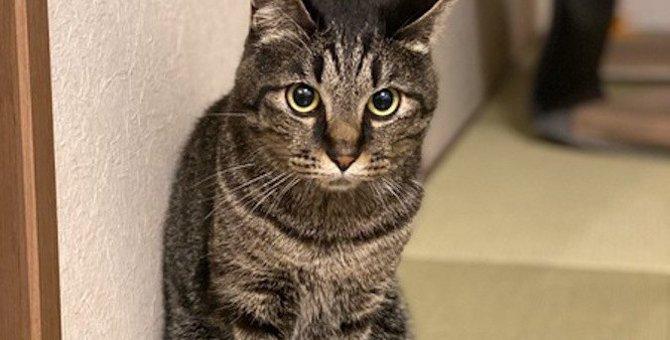 夏なのに猫が「しっぽマフラー」その理由3つ