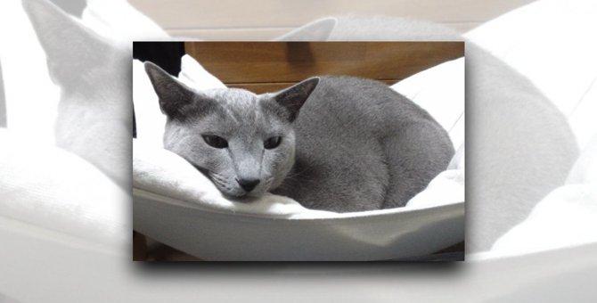 布を食べてしまう愛猫の意外な気遣いに涙|LAYLAのペットリーディング