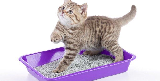 猫の『トイレ』の平均回数は?頻度が減少する5つの原因と対策を紹介!