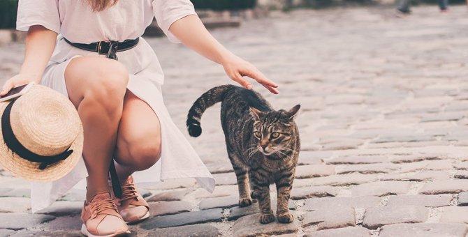 猫が「お尻トントン」好きな3つの理由