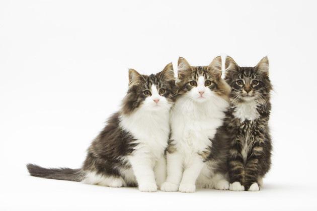 長瀬智也さんの飼っている猫がかわいい!種類や名前など