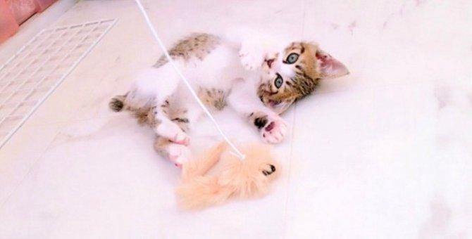 小さく臆病だから残された子猫…運命の出会いをつかんで幸せに!