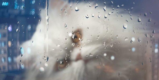 雨の日は猫もダルい?晴れの日との違いと対策