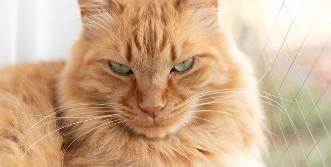 猫が『飼い主不信』になってしまうNG行為5つ
