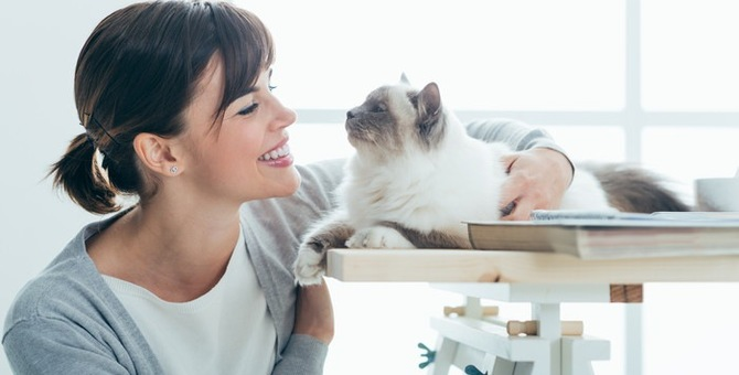猫もヘルニアになるの!?近年増加する病気について学ぼう!