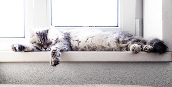 猫の負担になる『NGな暑さ対策』3選!正しい予防法とは?