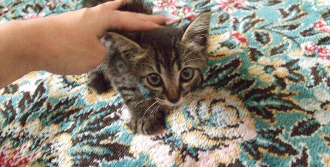 高架橋のガードレールで怯えていた子猫「コットン」奇跡の出会いに感謝