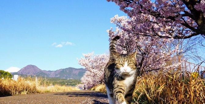 野良猫に『絶対しちゃダメなこと』3つ!トラブルに繋がってしまう行為とは?