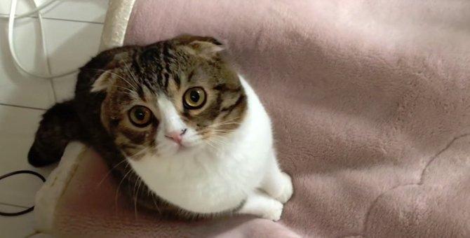 捕まえたい!反射した光が気になる猫ちゃん!