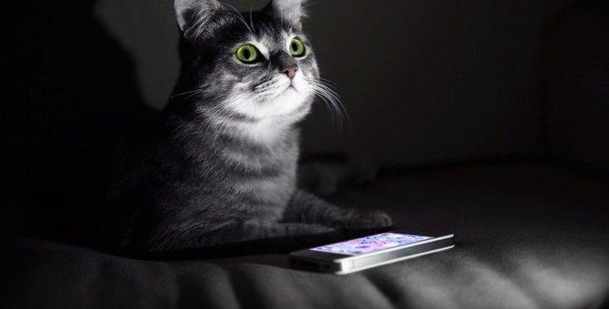 猫が『夜寝なくなったとき』に考えられる4つの原因と対処法