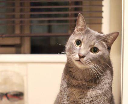 猫が甘えてきた時にすべきベストな対応5つ