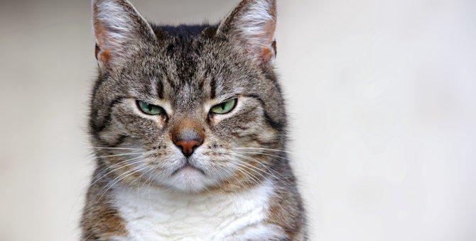 人に催眠術をかける猫が実在していた…!?その真相とは!