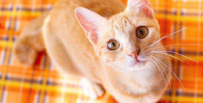 依存心が強い猫の特徴3つ