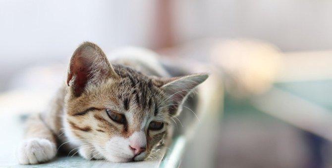 猫が捨てられたと感じる可能性がある行為3つ