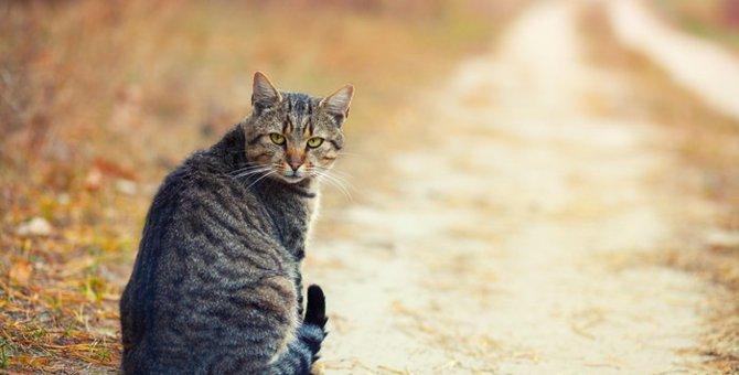 猫の3歳における体調管理と病気について