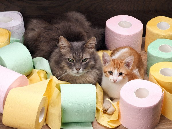 猫のトイレのしつけ方、トレーニングの方法