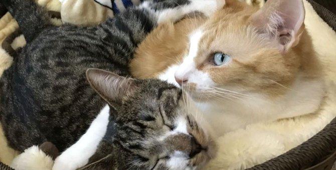メンタリストDaiGoが溺愛!飼っている猫の名前や種類は?