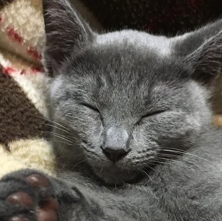 猫と人が『幸せホルモン』を分泌させるには?