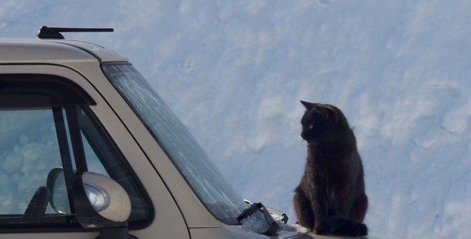 猫を車に乗せる時の注意点 車酔いを防ごう!